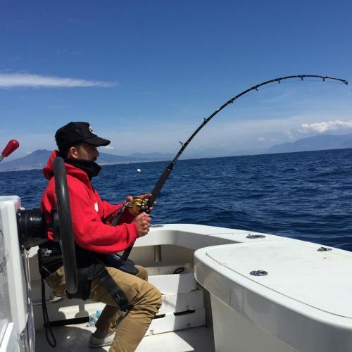 fight! bluefin tuna